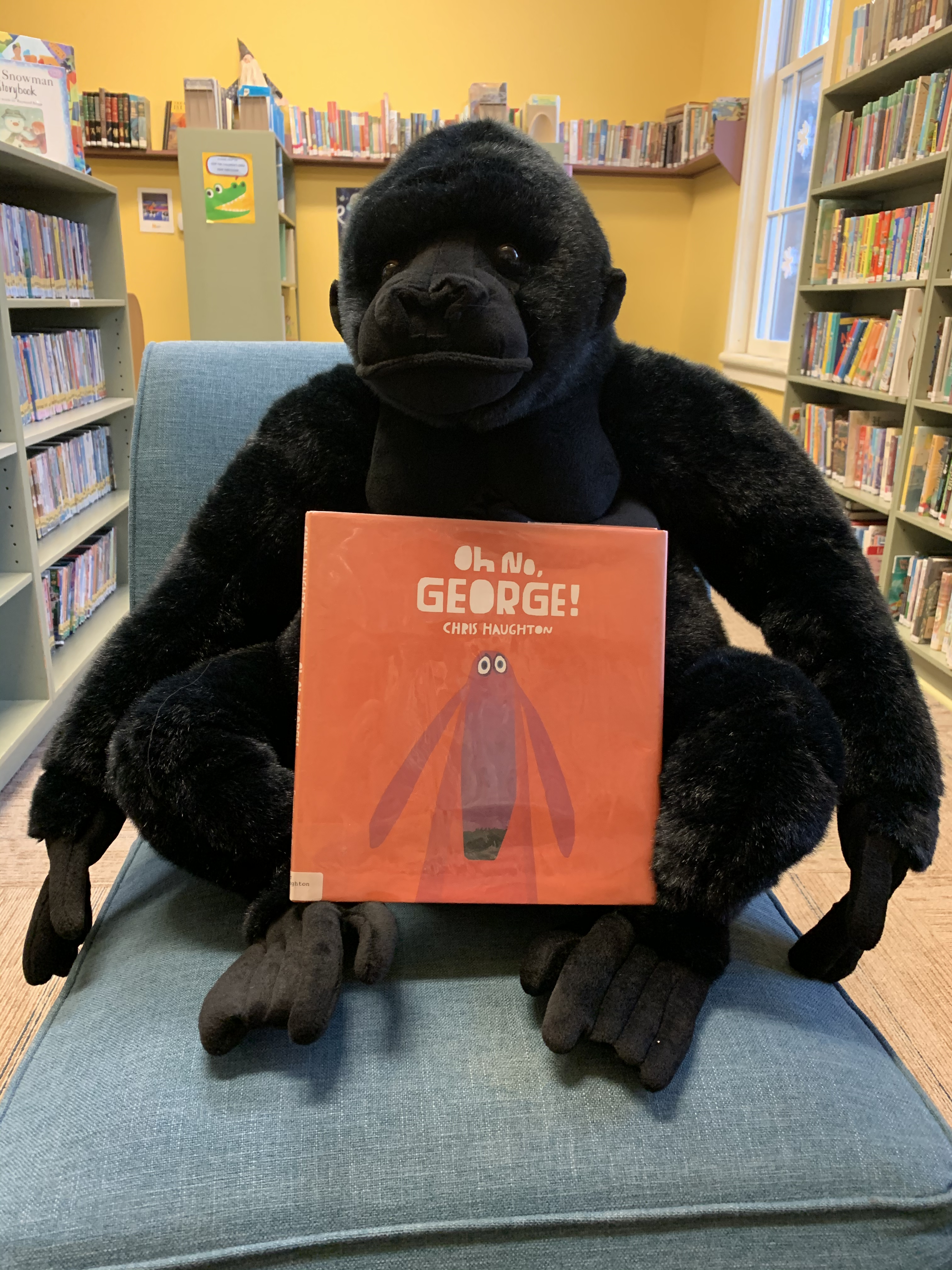 gorilla-with-book-1